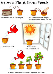 Spoed Foto op Canvas Kids Diagram showing how to grow plant from seeds