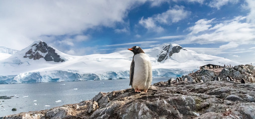 Fotobehang Pinguin Penguins in Antarctica. Port Lockroy.