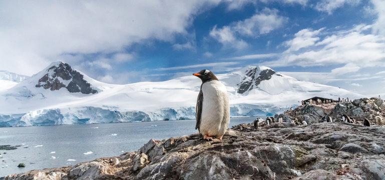 Penguins in Antarctica. Port Lockroy.