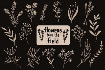 Flowers from the field. Vector illustration. Fotobehang