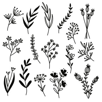 Flowers from the field. Vector illustration on a white background.