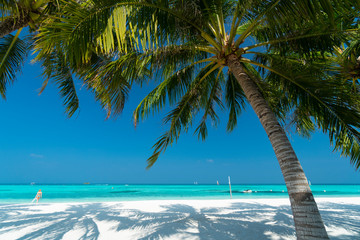Foto op Canvas Palm boom Sandy beach of tropical island in the Maldives