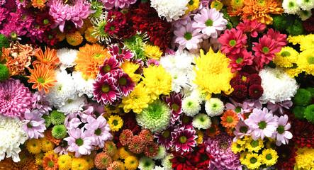 Spoed Fotobehang Bloemen Flowers wall background with amazing red,orange,pink,purple,green and white chrysanthemum flowers ,Wedding decoration, hand made Beautiful flower wall background