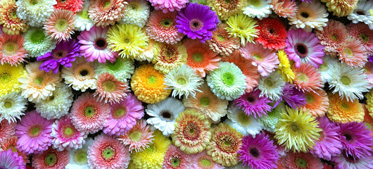 Photo sur Plexiglas Fleuriste Flowers wall background with amazing red,orange,pink,purple,green and white gerbera flowers ,Wedding decoration, hand made Beautiful flower wall background