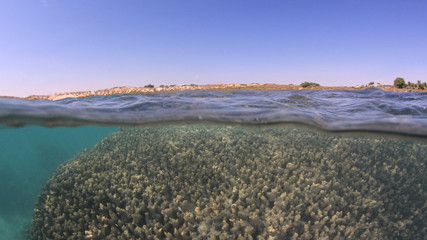 Wall Mural - Over under split photo of shallow coral. Shallow reefs like this are vulnerable to climate change which causes coral bleaching