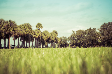 Green spring park with fresh grass, trees, palms. Beautiful nature background