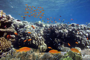 Fototapete - Vivid coral reef and tropical fish