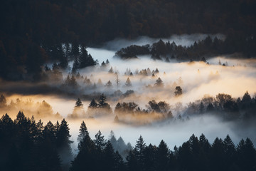 Nebellandschaft mit goldenem Sonnenaufgang auf verschiedenen Ebene von Bäumen