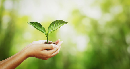 Wall Mural - environment concept. hand holding young plant on green blur with sunshine background