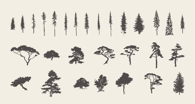 Set silhouettes trees pine fir cedar vector sketch