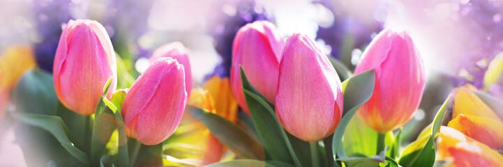 Photo sur Plexiglas Tulip Pink tulips in a flower bed