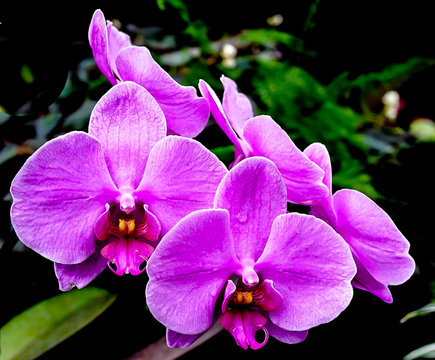 Purple Orchid Blooms