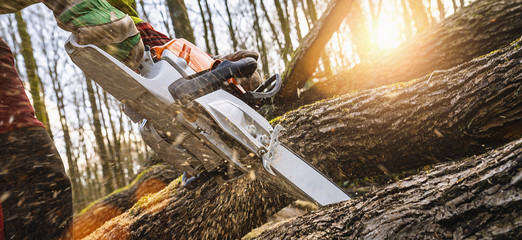 Woodcutter saws tree with chainsaw on sawmill