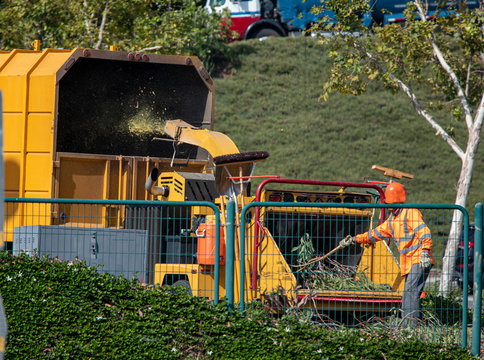 Man in orange safety vest and orange hard hat operating tree chipper Machine grinding tree into yellow covered truck