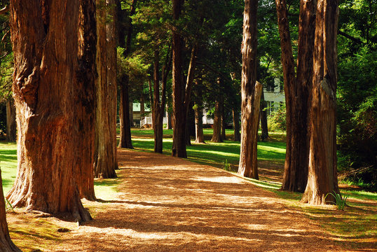 A tree lines path leads to Rowan Oak, William Faulkner's home in Oxford, Mississippi