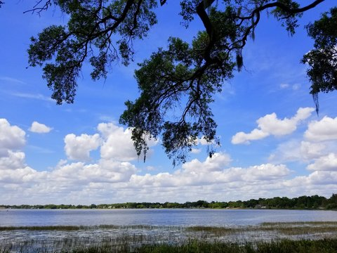 An oak tree with hanging moss by the lake near Heritage Park, Winter Haven, Florida, U.S.A