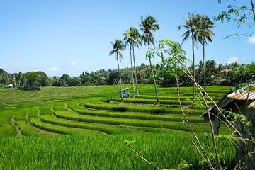 Reisfelder Fotoväggar
