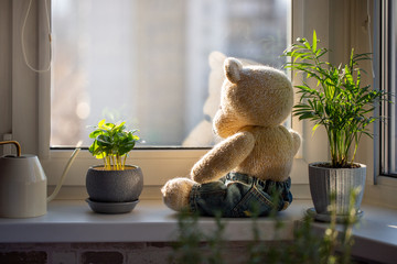 Cute knitted teddy bear sits on a windowsill next to pots with houseplants and looks out the window on sunny day.