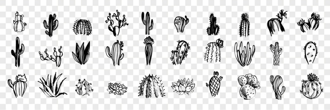 Doodle, sketch, hand drawn cactuses set collection
