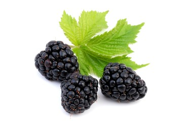 Blackberry with leaf isolated on white, Healthy berries.