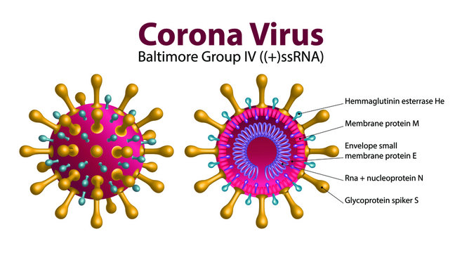 Diagram of Coronavirus particle structure, 2019-nCoV Novel Coronavirus Bacteria. No Infection and Stop Coronavirus Concepts. Dangerous Coronavirus Cell in China, Wuhan. Isolated Vector Icon