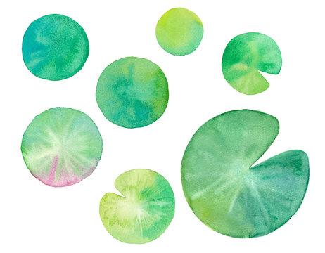 夏の素材:睡蓮の葉の水彩イラストのトレースベクター
