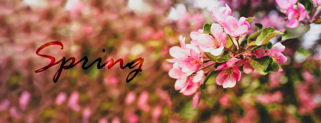 Photo sur Plexiglas Printemps Branches of a blossoming pink tree of apple or sakura closeup spring text. Spring natural natural background.