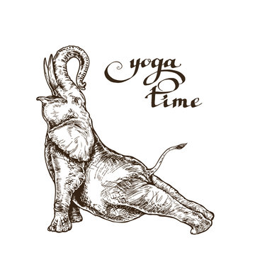 Elephant meditates doing gymnastics workout time yoga style engraving sketch vector