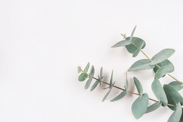 Printed roller blinds Floral Green eucalyptus branches on a white background. Flat lay, top view.