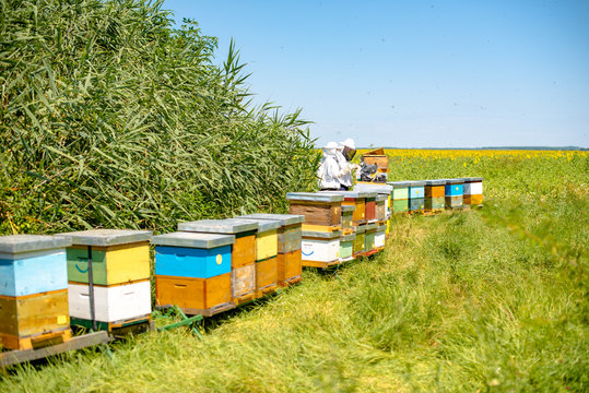 Beekeepers are working