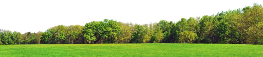 Waldrand Panorama im Frühling - Freisteller Fototapete
