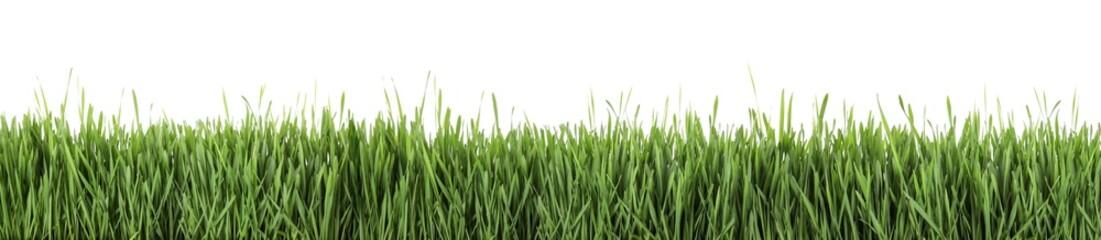 Foto auf Acrylglas Gras Fresh green grass on white background, banner design. Spring season
