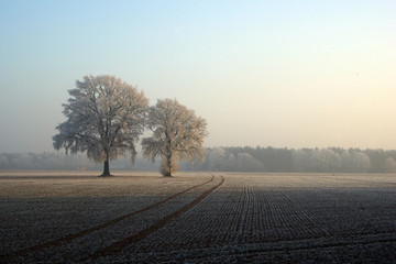 Photo sur Toile Gris Winterlandschaft, Baum, Nebel, Schnee,Frost