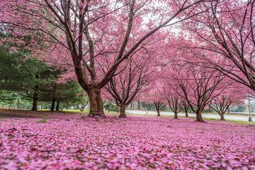 Photo sur Plexiglas Rose banbon Pink land!