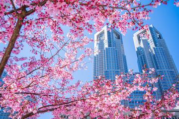 Deurstickers Kersenbloesem 東京 桜 サクラ 都庁 高層ビル SAKURA Cherry Blossoms