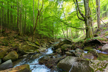 water stream in the beech forest. beautiful nature scenery in spring, trees in fresh green foliage. mossy rocks and boulders on the shore. warm bright weather