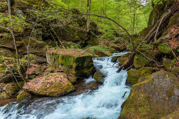 rapid water flow among the forest. trees in fresh green foliage. beautiful nature scenery in spring