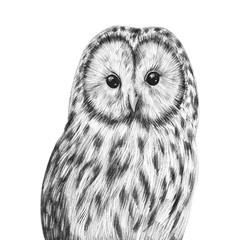 Wall Murals Owls cartoon Cute hand drawn owl portrait. Nursery poster