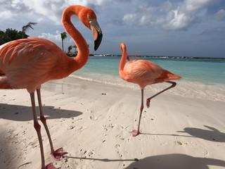 Foto op Canvas Flamingo flamingo in water