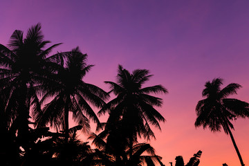 Fond de hotte en verre imprimé Prune Silhouette coconut tree on sunset sky background