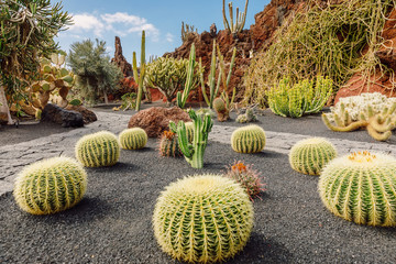 Aluminium Prints Canary Islands Cactus garden in Lanzarote, Canary Islands