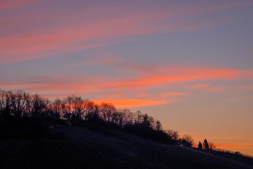 Fototapete - Bäume und Weinberg in Dämmerung am Morgen