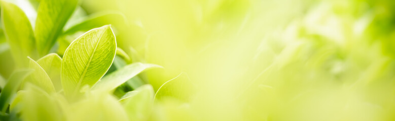 Amazing nature view of green leaf on blurred greenery background in garden and sunlight with copy space using as background natural green plants landscape, ecology, fresh wallpaper concept.