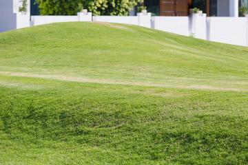Keuken foto achterwand Lime groen Green grass lawn during sunset. Wheat germ in the field