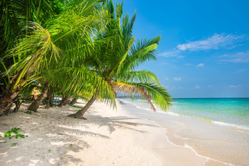 Wall Mural - beach and coconut palm trees