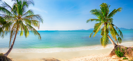Fototapete - panoramic tropical beach with coconut palm