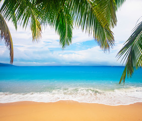 Fototapete - tropical beach with coconut palm