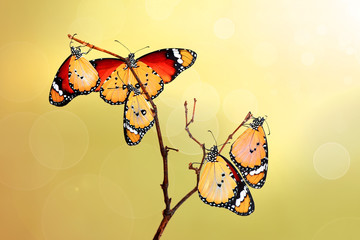 Foto op Plexiglas Vlinder Closeup beautiful butterflies sitting on the flower.
