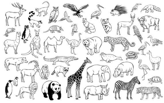 Zoo animals traditional