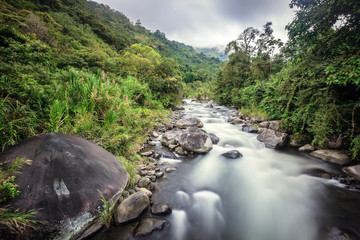 Mountain stream in Costa Rican forest